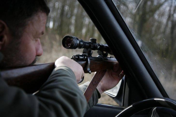 Fallow deer hunting by Jan Kadlec