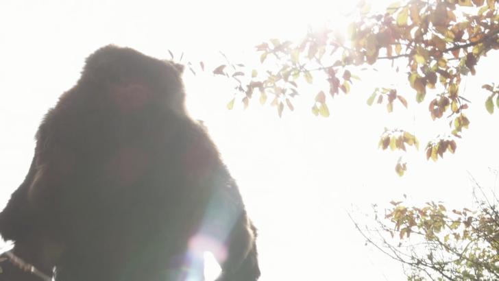 The bear: a sickness unto death by Jan Kadlec